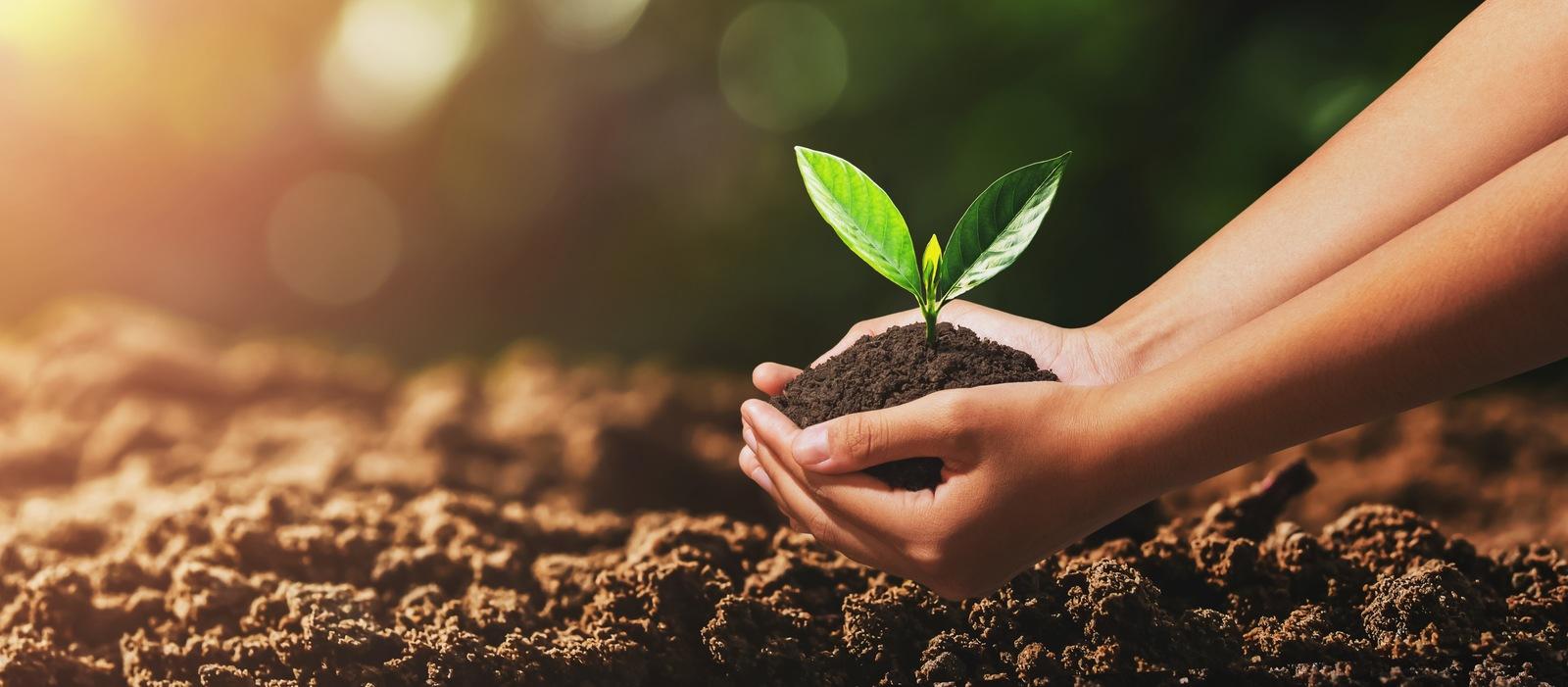 Światowy dzień gleby – grunt togleba!